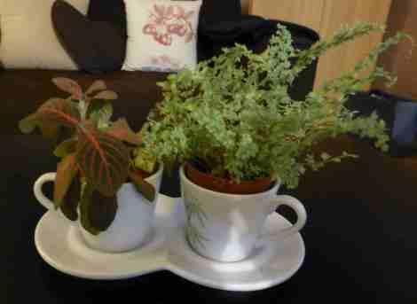tasse à plantes